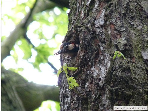 i Young woodpecker